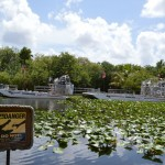 A Thrilling Airboat Ride in the Everglades, Florida
