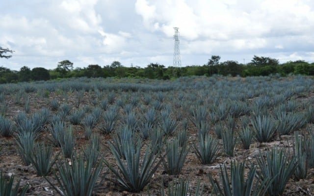 Mayapan Distillery, Distillery, Tequila, Yucatan Peninsula, Mexico, Valladolid, road trip, Didtillery tour,