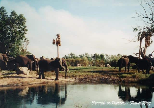 Enjoying a peaceful Safari - feels like Africa, but it's Disney World!