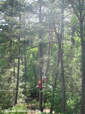 ladder at treetop adventure