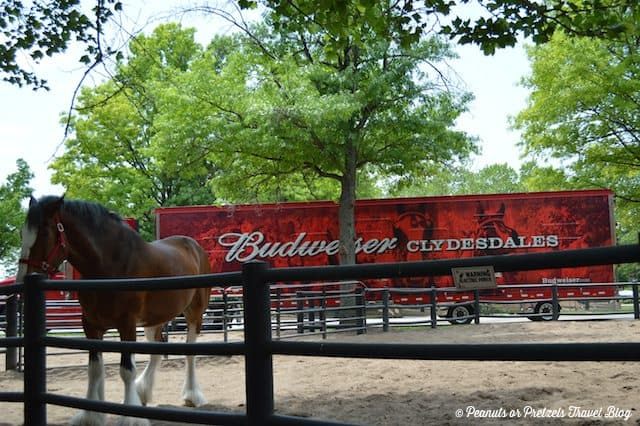 What to Expect from the Anheuser-Busch Brewery Tour in St. Louis, MO