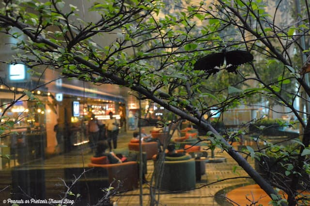 Butterflies and Orchids - inside the Singapore Airport!