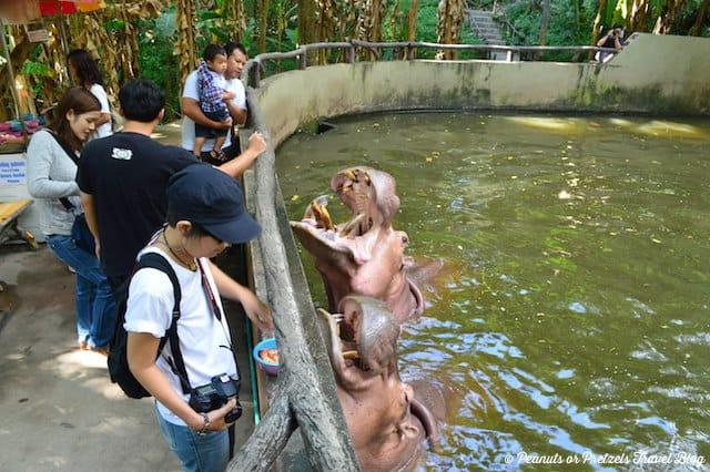 Chiang Mai Zoo - Peanuts or Pretzels