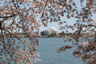 Celebrate Spring in Washington D.C. During the National Cherry Blossom Festival