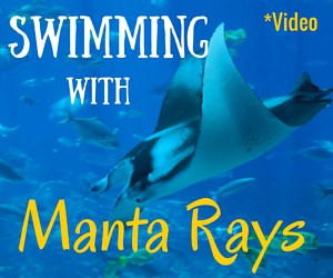 Swimming With Manta Rays in Hawaii…at Night!