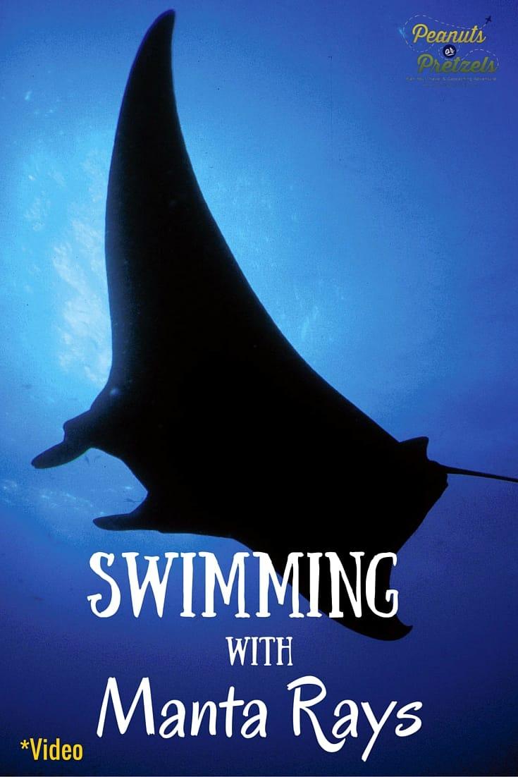 Sheraton Kona, Kona, Kona Hawaii, Swimming with manta rays, Swim with manta rays, Swim with manta rays in hawaii, Mantarays, Manta ray night snorkel, Kona snorkeling, Swim with manta rays, Snorkeling in hawaii, Manta ray dive big island, Manta ray night snorkel, Manta ray snorkel Kona, Manta Rays, Snorkeling in hawaii