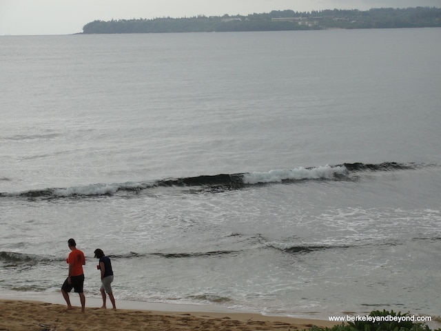 kauai-hanalei-colony-resort-view-from-my-window-5-c2014-carole-terwilliger-meyers-watermark-copy