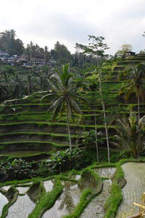 rice-field-bali