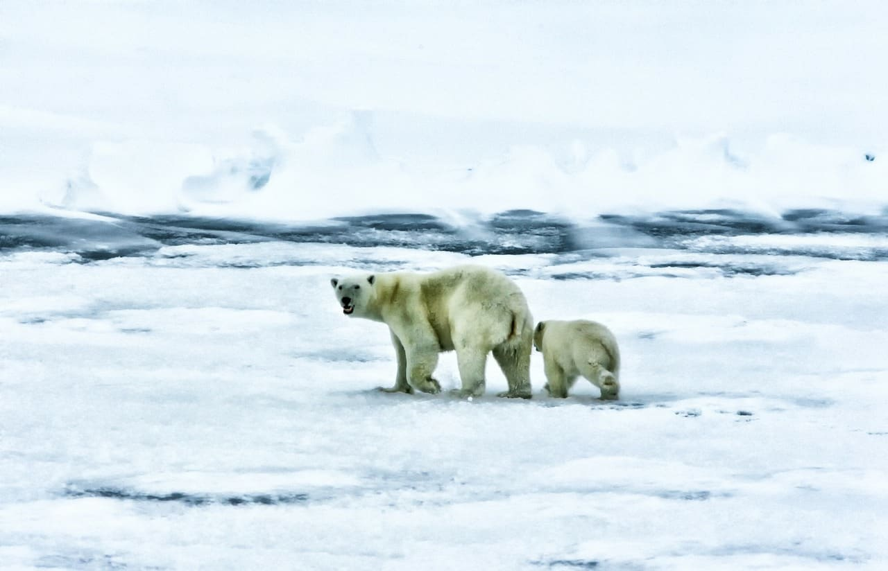 6 Tips on Choosing the Polar Cruise That's Right for You