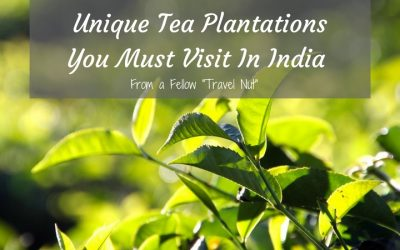 5 Unique Tea Plantations You Must Visit in India: By Trans India Travels