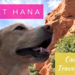 Meet Hana – Our New Traveling Pup!