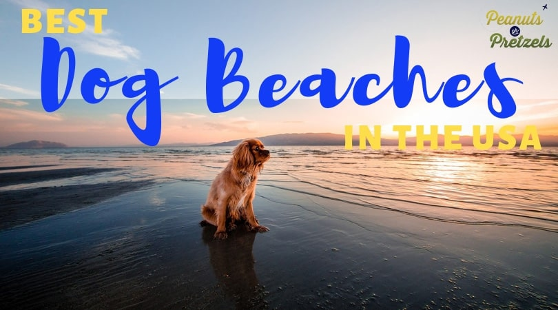 Best Dog Beaches in the USA (Including Hana's Faves!)