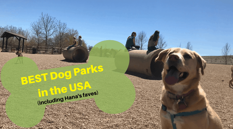 Top Dog Parks in the USA (Including Hana's Faves)!