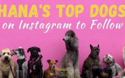 Hana's Top Dogs on Instagram to Follow