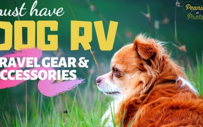 Must Have Dog RV Travel Gear & Accessories