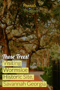 Visiting Wormsloe, things to do in savannah,