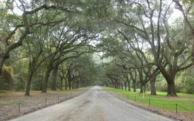 Those Trees!  Visiting Wormsloe Historic Site, Savannah Georgia