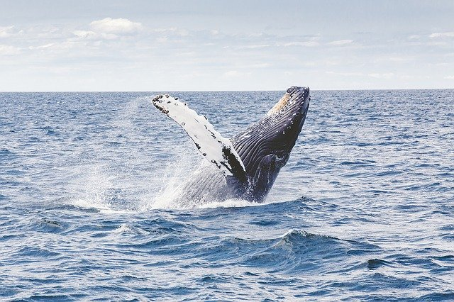 Day Trips from San Diego, whale watching california