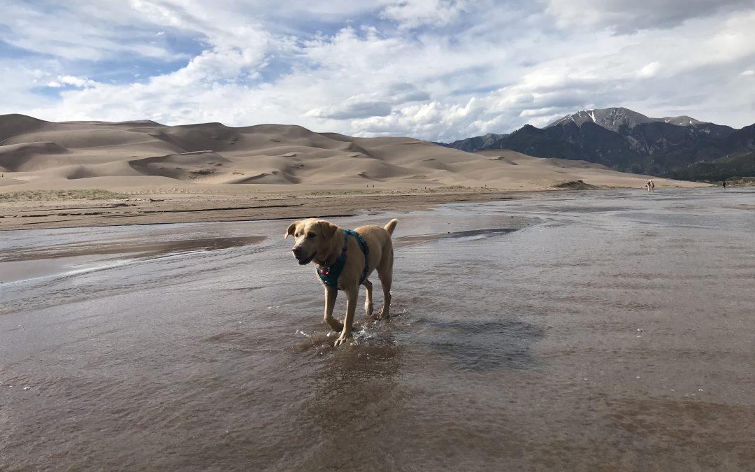 hana, national park pet policy, bark ranger program