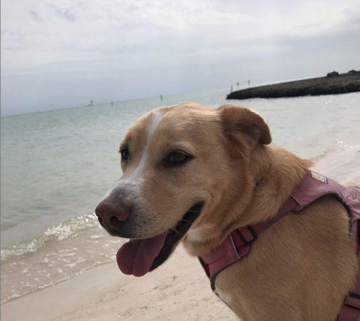 hana standing on sombrero dog beach florida keys