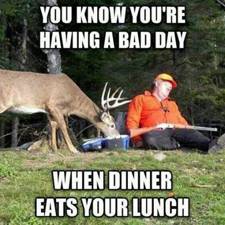 funny camping meme with sleeping hunter while deer eats food - it's a bad day when dinner eats your lunch