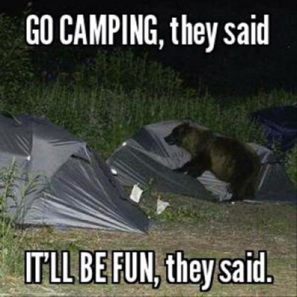 funny camping meme bear on tent go camping, it will be fun they said