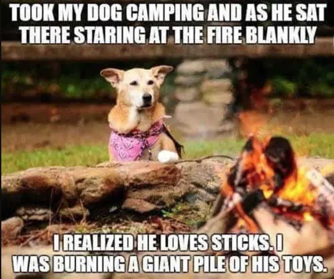 funny dog camping meme burning toy sticks in fire