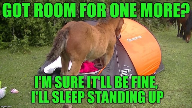 funny camping meme horse standing in tent got room for one more?