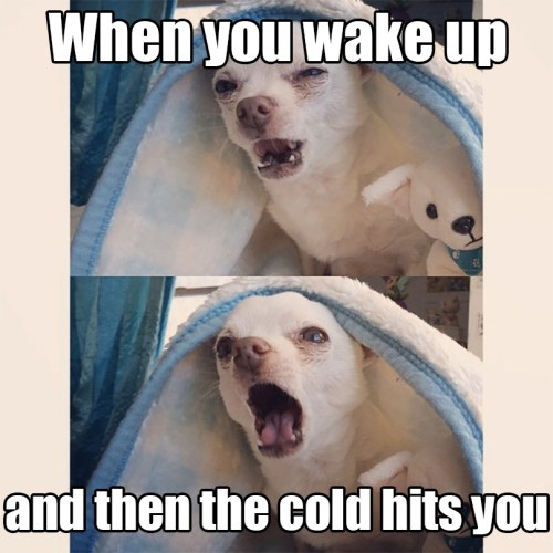 funny camping dog meme yelling cold
